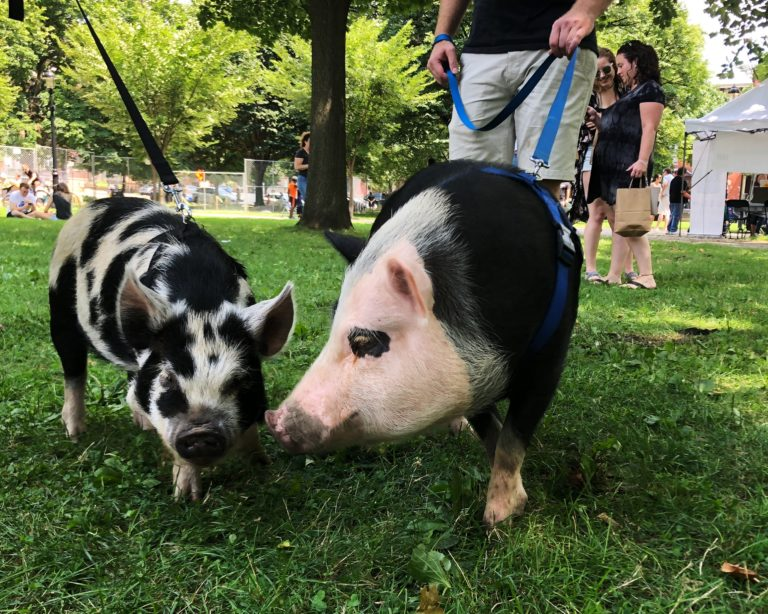 Pittsburgh VegFest 2018 – On the Scene