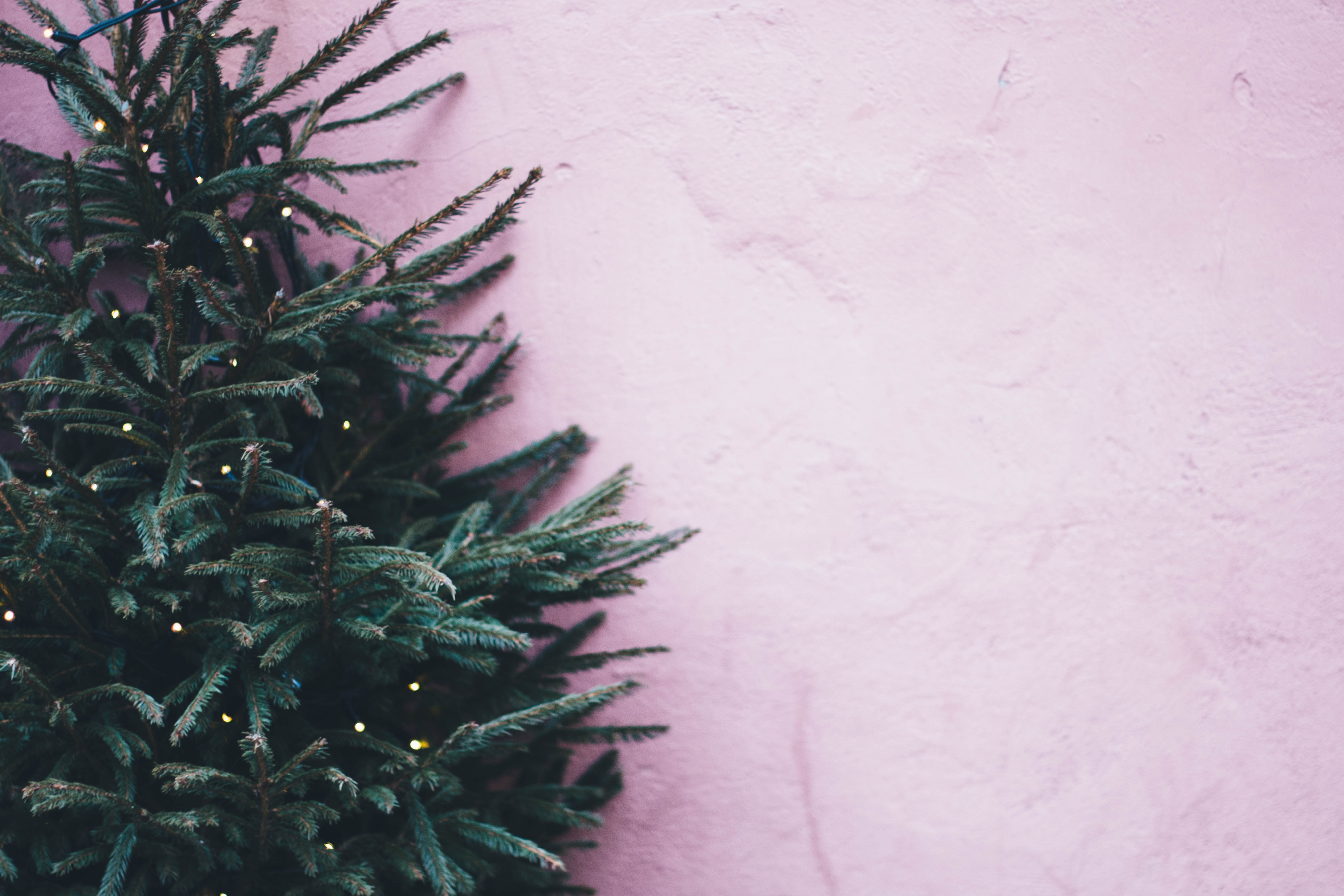 Christmas Tree Recycling Near Me.City S Recycling Program Saves Christmas Trees From Landfill