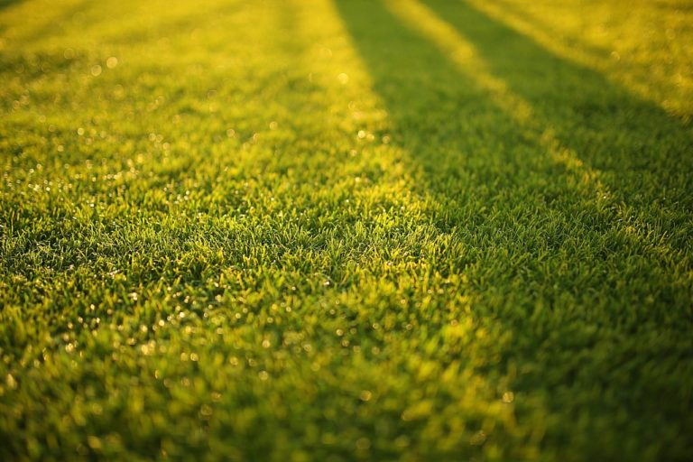 City now soliciting contractor proposals for lawn cutting program